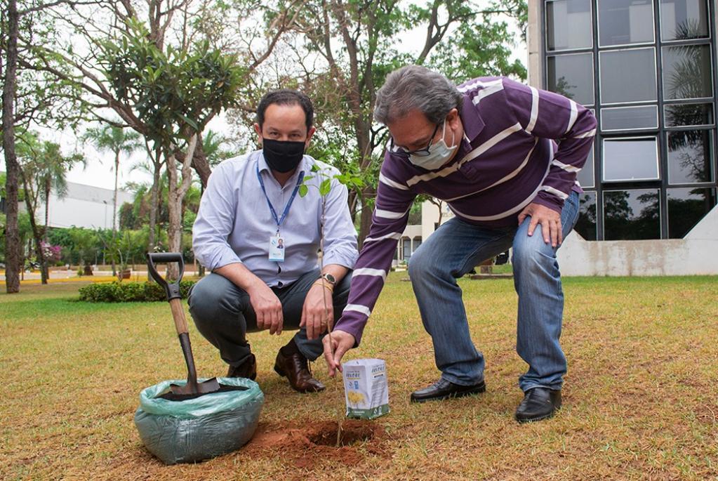 Plantio de ipê no TCE-MS lembra comemoração do Dia da Árvore