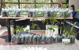 """Em comemoração ao """"Dia da Árvore"""" servidores do TCE-MS ganham mudas de espécies do Cerrado"""